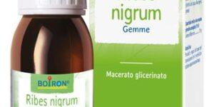 RIBES NIGRUM MACERATO GLICERICO 60 ML INT