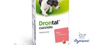 DRONTAL CUCCIOLO orale sosp 1 flacone 50 ml