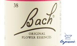 WILLOW BACH ORIG 20 ML